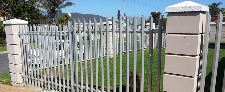 A dog standing in front of a galvanised palisade fencing.