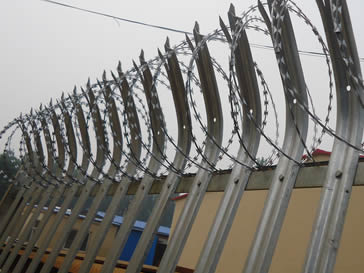 Galvanised palisade fencing twined by razor wire.